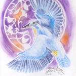 20121205 -bokuscan -eisvogel 001
